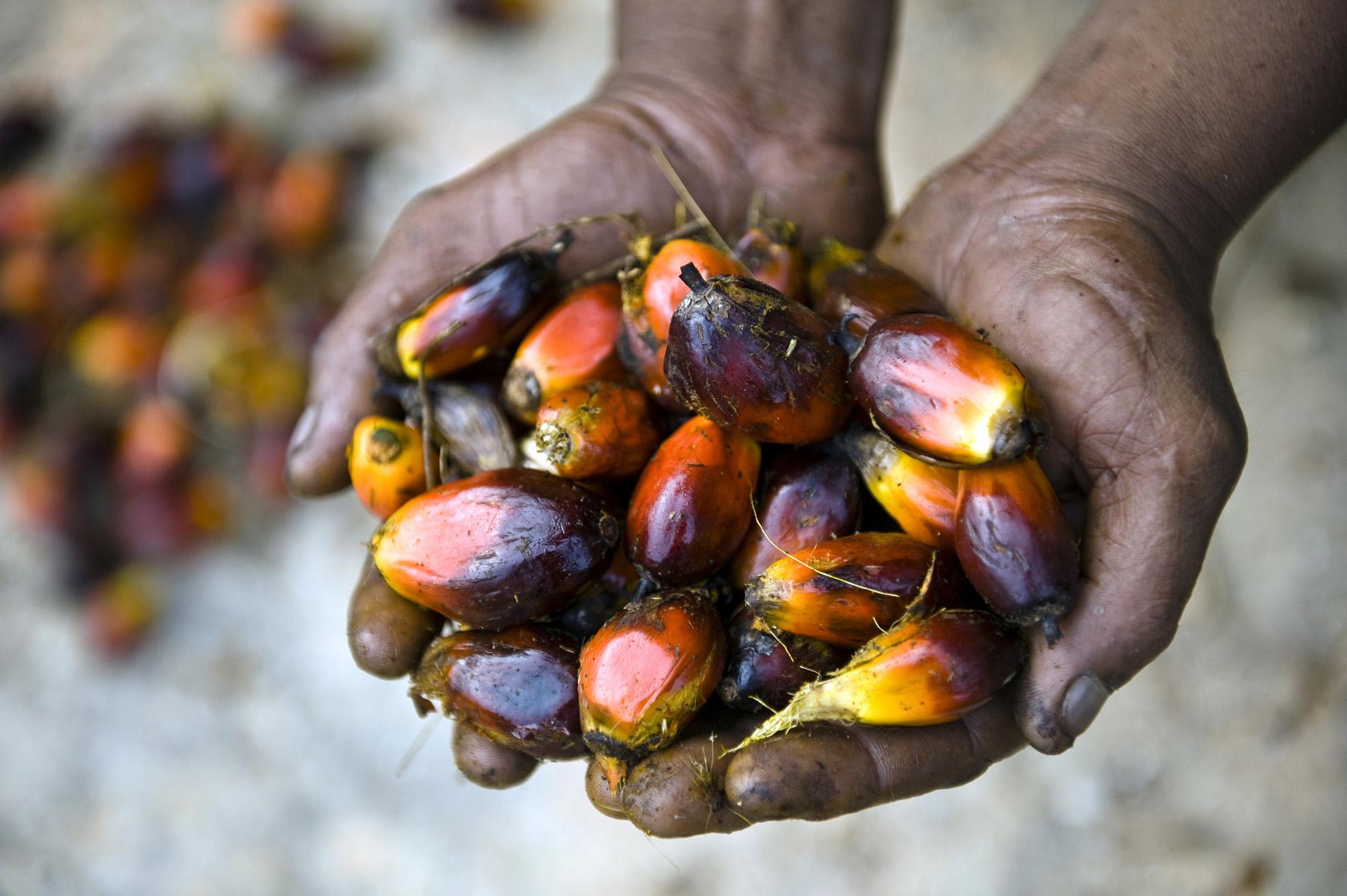 Palmöl Orang Utans