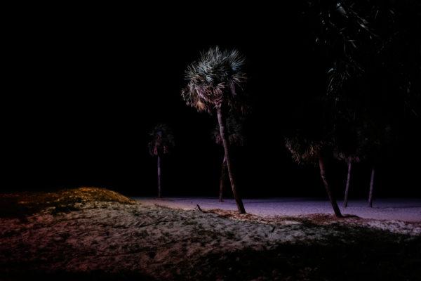 Palmen am Strand von Biloxi. Die Küstenstadt ist vorallem durch ihre Casinos bekannt.
